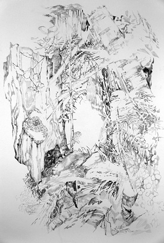 Graphite drawings of a forest by Regan Golden, Regan Golden-McNerney