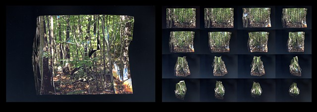 Inside Out Picture of a Forest: pages 17 and 37