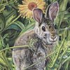 Cottontail with Pot-Marigolds