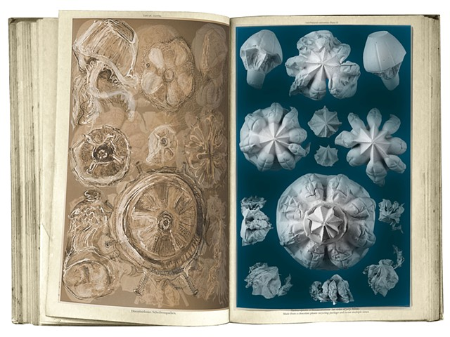 book plates- plaster casts-  scientific illustrations