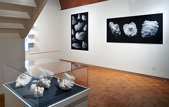"gallery shot of Karsh Masson exhibition  ""Big Pictures/ Small Things"" Ottawa, Canada"