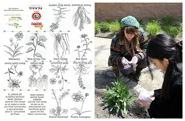 Native Plant Identification zines