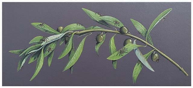 Olive Branch with Spiders