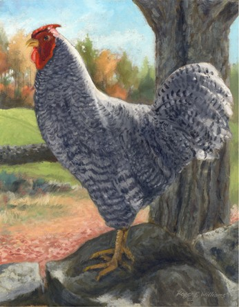 """""""Rooster on Eastman Hill"""""""