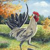 """White Rooster on Eastman Hill"""