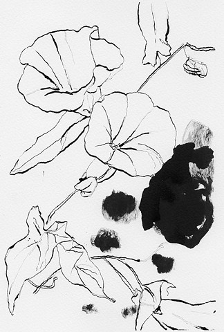 morning glory flower drawing ink on paper
