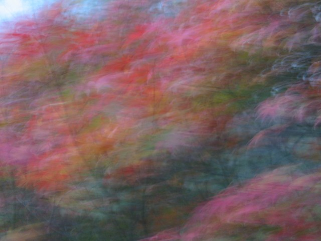 maples, blur