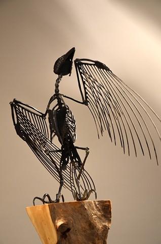 Crow - rear view