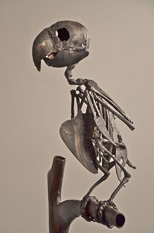 Parrot - detail