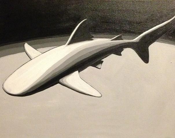single shark