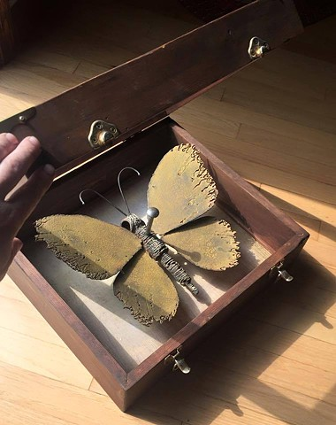 """specimen box"" wood, welded steel, glass, 14""x14""x8"""