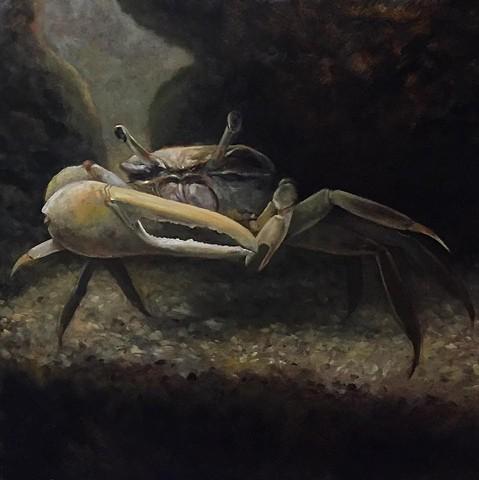 """fiddler crab"" oil on panel 28""x28"""