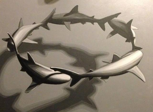 shark circle
