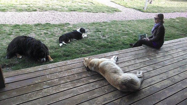 Karen with the ranch dogs: Smalls, Biggie and Squirt