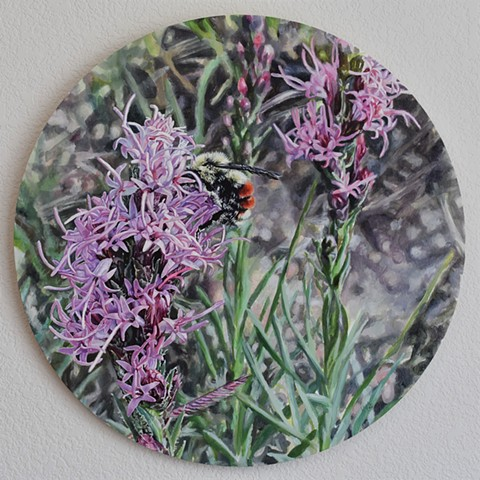 bee painting, wildflower, colorado wildflower, floral painting, round artwork, photorealism, nature painting, pollination