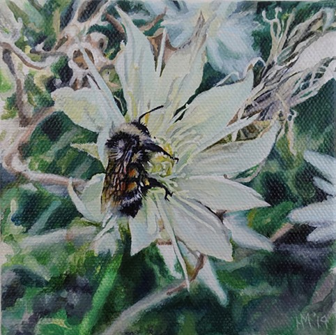 bee painting, evening star, colorado wild flower, pollinator, nature painting, small work