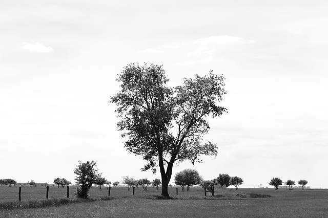 Plains trees