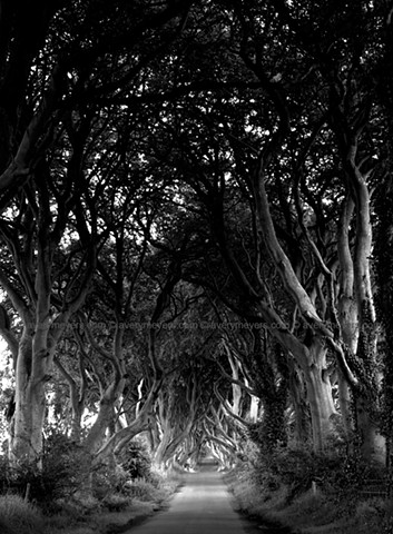 The Dark Hedges, N. Ireland