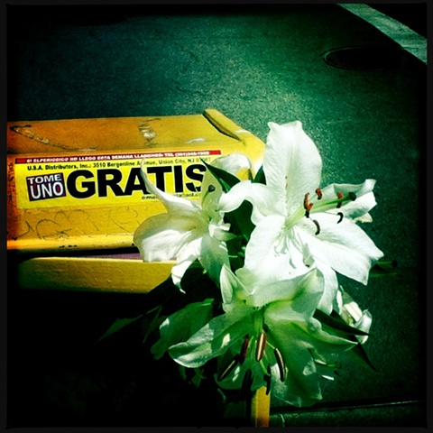 Gratis~ Lilies in the News Stand