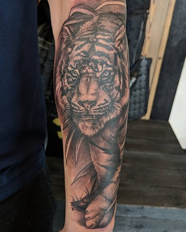 Tiger Arm Tattoo by Kevin Sherritt Black and Grey Black Gold Tattoo Co.
