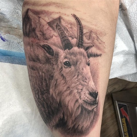 Mountain Goat Tattoo By Steve Hayes Black And Grey Black Gold Tattoo Co