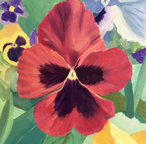 Bold Red Pansy