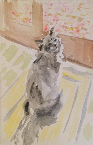 cat, sunlight, watercolor, window