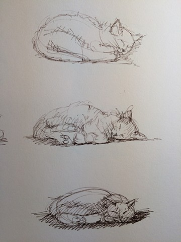 loose sketches of cats