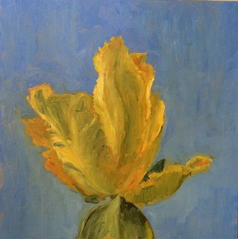 Fancy Yellow Tulip with Bright Blue Sky