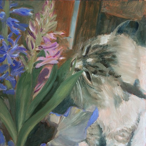 Cat smells purple and pink hyacinth flowers