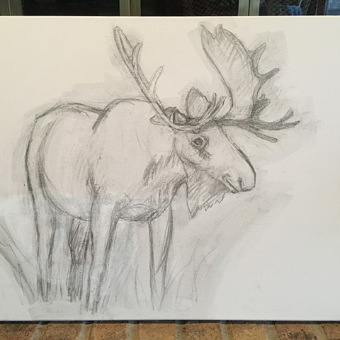 Moose sketch on canvas