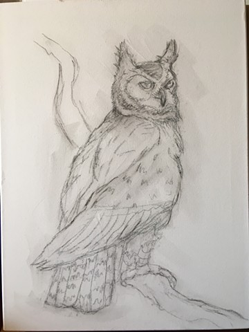 Owl sketch on canvas.