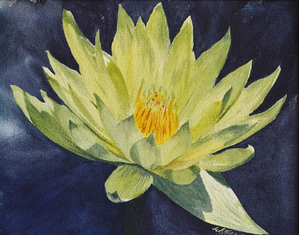 Yellow Waterlilly