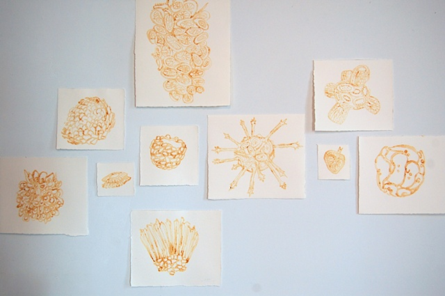 Ocean Life - Installation View 5