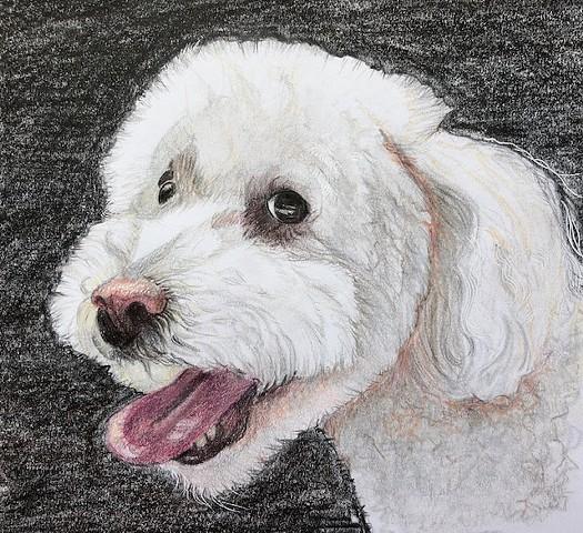 dog portraits, color pencil, small animals