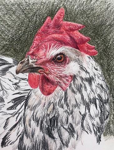 Maite's Chicken