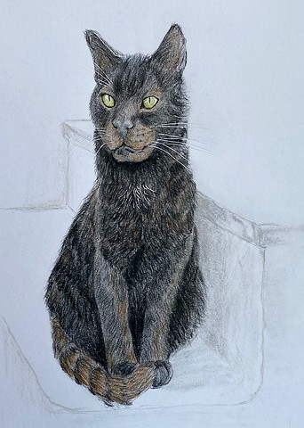 color pencil drawing of cat in Greece