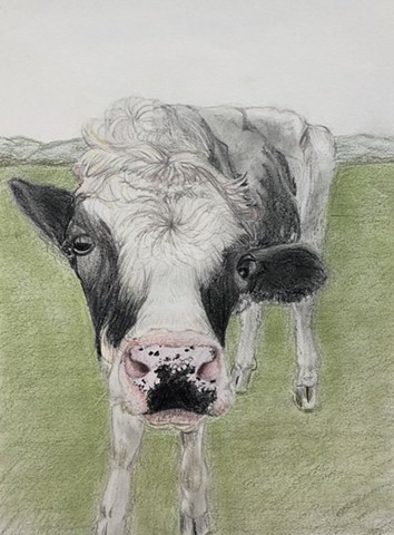 cow drawing color pencil