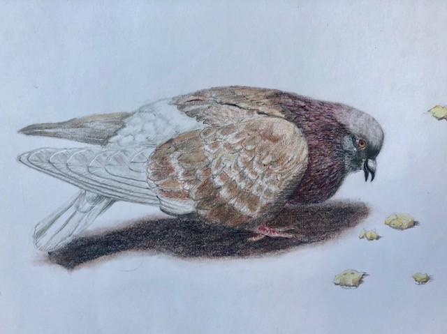 bird drawing color pencil