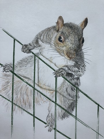 small animal drawing squirrel