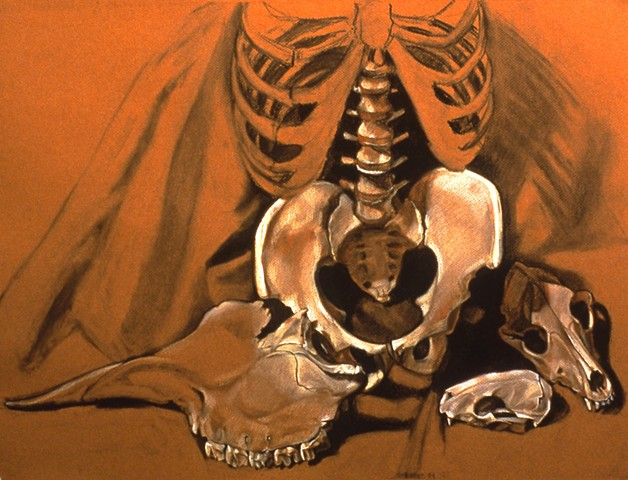 Pamela Sienna drawing of bones, contemporary charcoal drawing