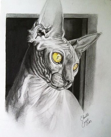 Lovecraft Tattoo, Charlotte Epright, Hairless Cat Portrait, Drawing, Cat, Cat sketch