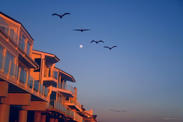 Pelicans in formation at Malibu Ca.  Malibu Beach Ca. and the tiny Moon