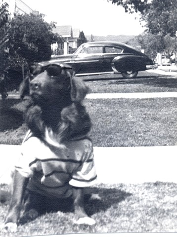 Cocker Spaniel / Irish setter mixed mutt our family pet in the 1950s Rexie R.I.P