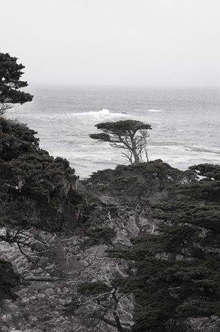 Point Lobos #2
