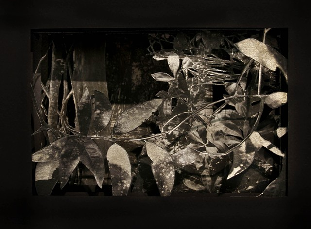 Forest through the trees, Miami-02