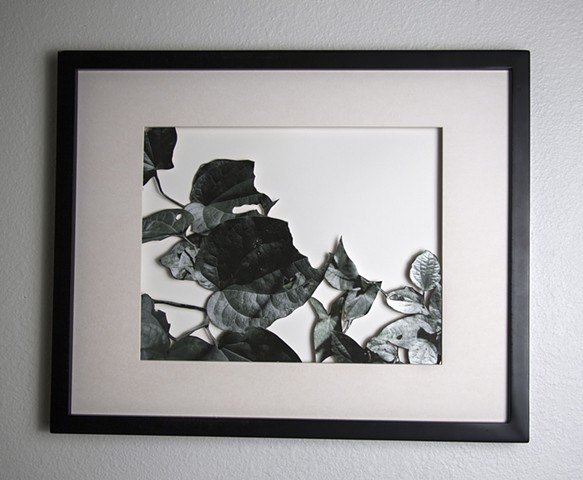 12 Xacto hand cut photograph  Work sold unframed