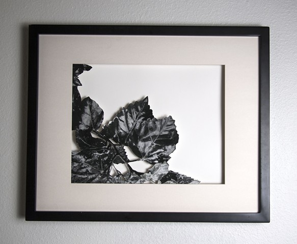 13 Xacto hand cut photograph  Work sold unframed