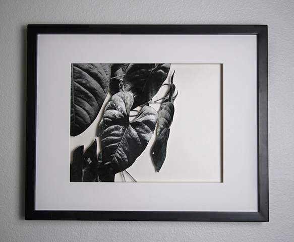 06 Xacto hand cut photograph  Work sold unframed