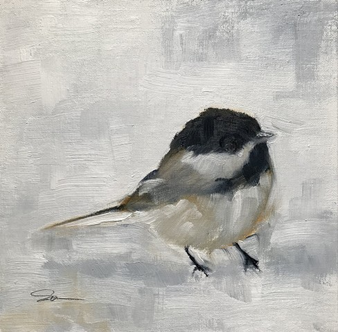 Chickadee On White